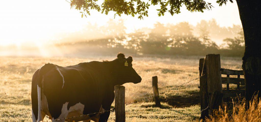 Signalen voor boerenleed