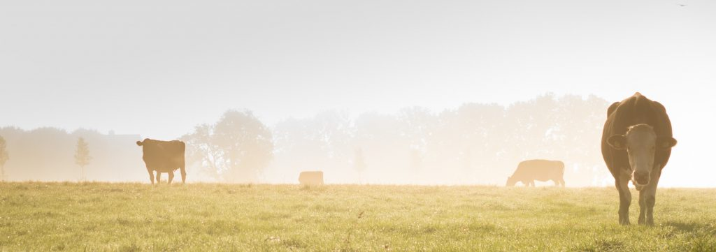 Hulp voor boeren in de knel